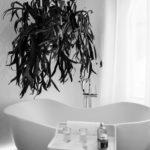 Enduit mural salle de bains : le revêtement mural
