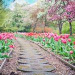 Créer un jardin extérieur étape par étape