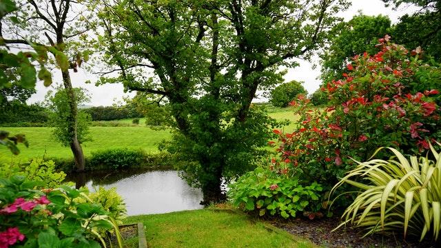 Jardin Pelouse