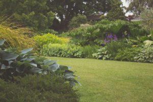 Pelouse Jardin 7283