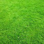 La pelouse naturelle