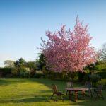 Rénover sa pelouse au printemps